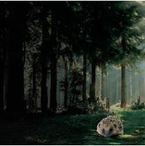 Igel im Wald